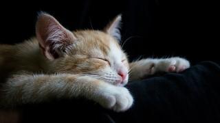 生活習慣を変えるために、寝る時間を早くしてみる