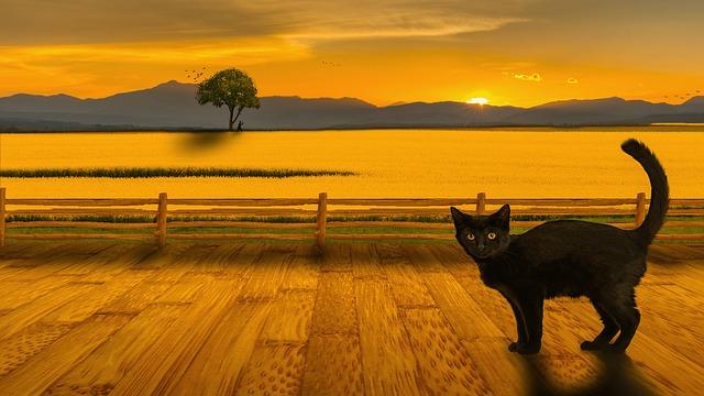 cat-1353325_640