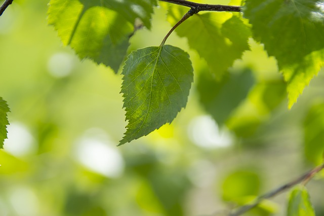 green-color-1365975_640